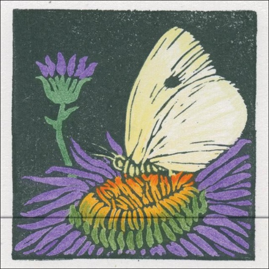 Matchbook Notebook - Butterfly