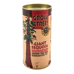 Giant Sequoia Grow A Tree