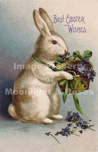 Best Easter Wishes Bunny