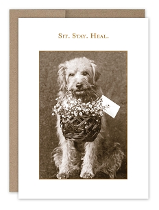 SIT. STAY. HEAL.