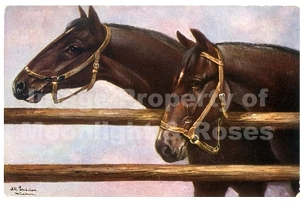 Two Horses at Fence Card