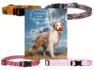 Dog Collars - Medium