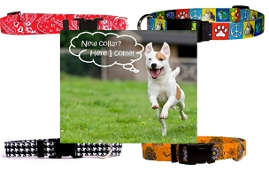 Dog Collars - Small